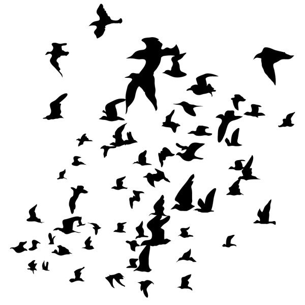 Sticker vol d oiseaux france stickers - Dessin oiseau en vol ...