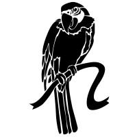 Perroquet 3