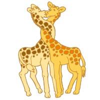 Girafes Amoureuses