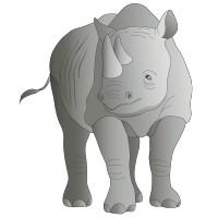 Rhino 2