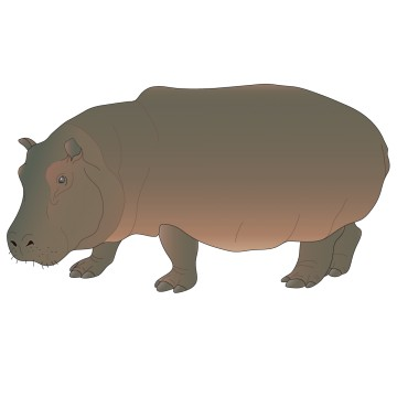 stickers Hippopotame 1
