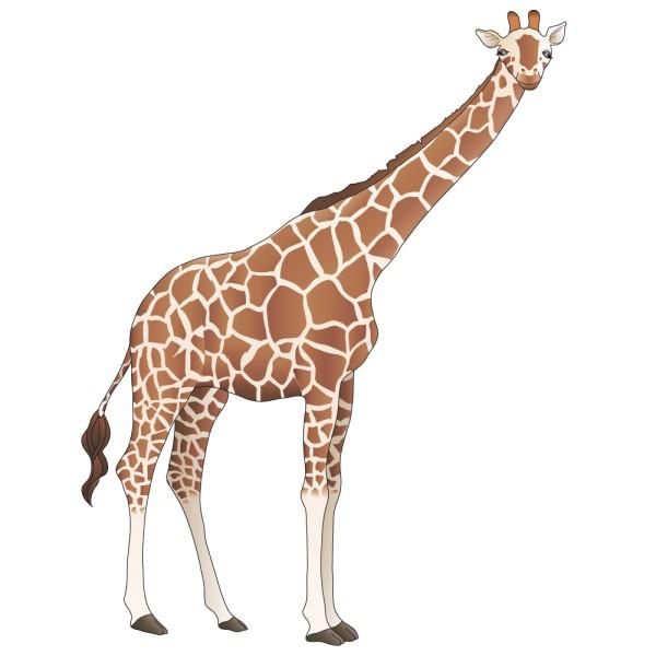 Stickers girafe france stickers - Dessin de girafe en couleur ...